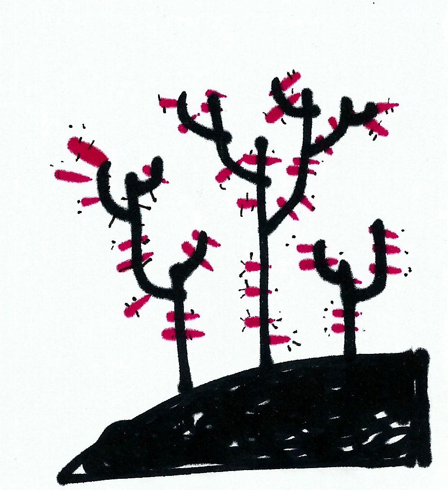 dibujo drawing minimal desert cactus plantas espina