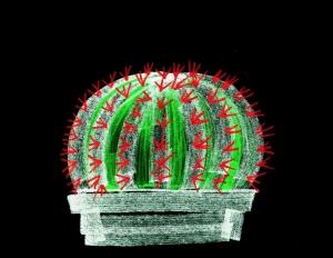 dibujo drawing minimal cactus crown espina