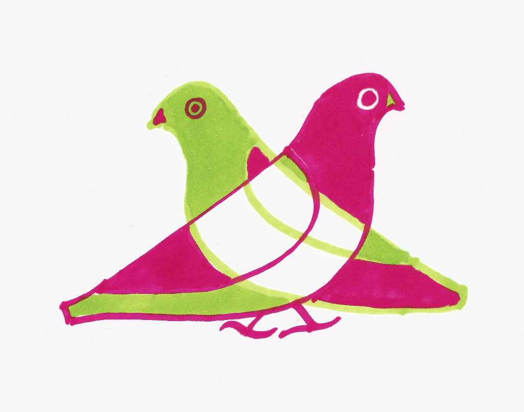 dibujo drawing minimal pichón pidgeon